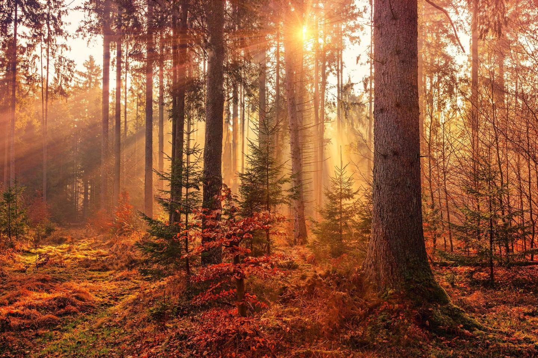 Die Natur ist unser Vorbild